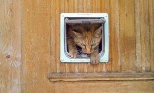 Katzentür in Holz