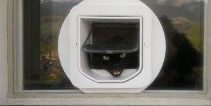 Katzentür in Einfachverglasung